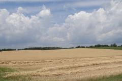 field205