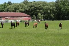 farm1661