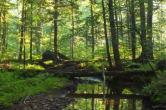 FINGER LAKES NATIONAL FOREST 2