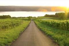 finger_lakes_vineyards